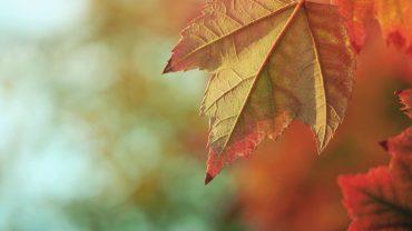 Ayurveda-Herbst