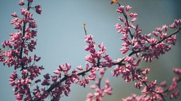 Frühling Ayurveda